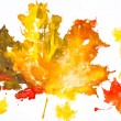 Autumn leaves watercolor print on paper. child drawing — Stock Photo #55854565