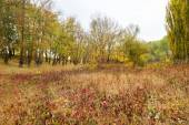 Autumn forest after the rain — Stock Photo