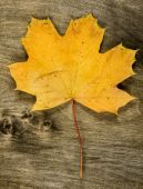 Yellow maple leaf on wooden background — Stock Photo