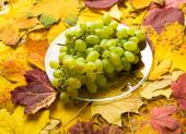 Grape on autumn leaves background — Stock Photo