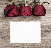 Red rose flower with blank sheet on wood — Stock Photo
