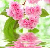 Pink flower reflected in water — Stock Photo