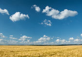 Yellow wheat field and sky summer landscape — Stock Photo