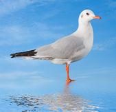 White bird seagull on sky background — Stock Photo