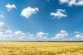 Yellow wheat field and blue sky summer landscape — Stock Photo