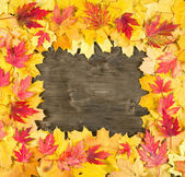 Autumn leaves frame on wood background — Stock fotografie