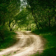 Ground road in summer forest  — Stock Photo #70214945