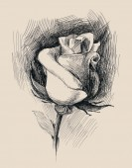цветочный эскиз — Стоковое фото