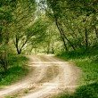 Ground road in summer forest  — Stock Photo #70939975