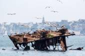 Ship wreck and seagulls — Stock Photo