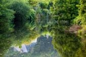Forest reflecting on river — Stock Photo