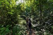 Trekkers in dense jungle — Stock Photo