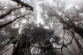 Misty jungle — Stock Photo