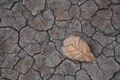 Dry brown leaf on cracked earth — Stock Photo
