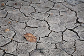 Dry brown leaf on the cracked earth — Stock Photo
