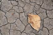 Dry  leaf on the cracked earth — Stockfoto