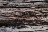 Wooden grunge stack timbers — Stock Photo