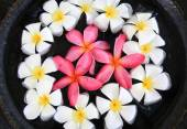 Frangipani or Plumeria flowers in terracotta pot — Stock Photo