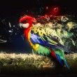 Parrot on the branch, abstract animal concept — Stock Photo #61498925
