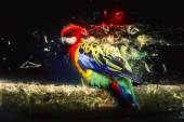 Parrot on the branch, abstract animal concept — Stock Photo