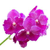 Beautiful purple orchid isolated on withe background with workin — Stock Photo