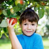 Little boy in cap picking apple — Stock Photo