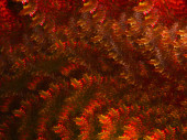 Colorful digita fractal with fine texture suitable as backdrop f — Stock Photo