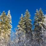 Winter forest on the Uetliberg mountain - Zurich, Switzerland — Stock Photo #65732099
