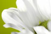 White flower petals on green background — Stockfoto