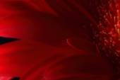Red flower petals on dark background — Stockfoto