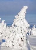 Wintertime on Brocken Mountain,Harz,Harz Mountain,Germany — Stock Photo