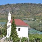 Vineyard of Badacsony,Lake Balaton,Hungary — Stock Photo #64989975