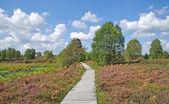 Hohes Venn Moor near Monschau,Eifel,Eifel National Park,Eifel region,Germany — Stock Photo