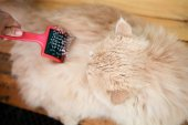 Cat is being combed. — Stock Photo