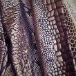 Texture of fabric striped snake leather for background — Stock Photo #70598043