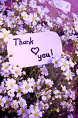 Banner with thank you and blossoms.  — Stock Photo