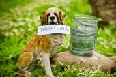 The dog raising money for the donations — Stock Photo
