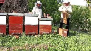 Work in apiary — Stock Video