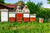 Work in apiary — Stock Photo