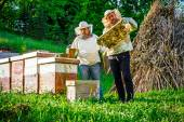 Work in apiary — Stockfoto