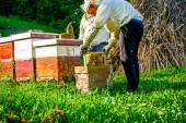 Trabajo en el apiario — Foto de Stock