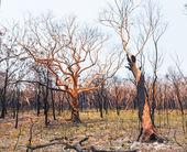 Bushfire aftermath — Stock Photo