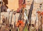 Honey eater in garden with gardening tools — Stock fotografie