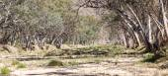 River bed Central Australia — Stock Photo