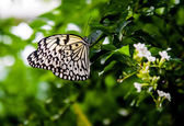Butterfly Paperkite — Stock Photo