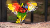 Exotiska papegoja — Stockfoto