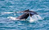 Beautiful whale — Stock Photo