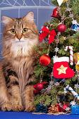 Christmas spruce — Stock Photo