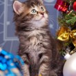 pluizig kitten — Stockfoto #53321057