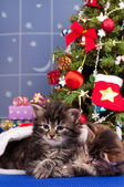 Cute kittens — Stockfoto